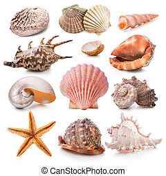 Seashell collection isolated on the white background
