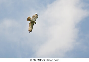 Red-Tailed Hawk Flying in a Cloudy Sky