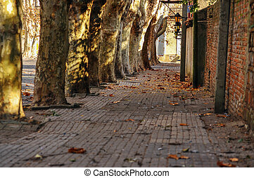 Historic Tree Lined Street - A historic tree lined street in...