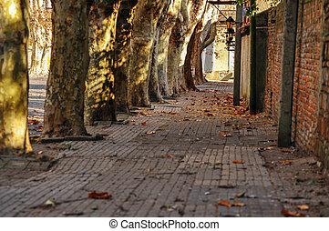 Historyczny, drzewo, liniowany, ulica
