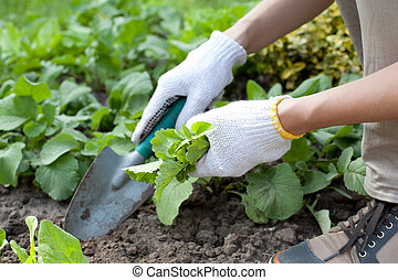 Young woman with shovel working in the garden bed