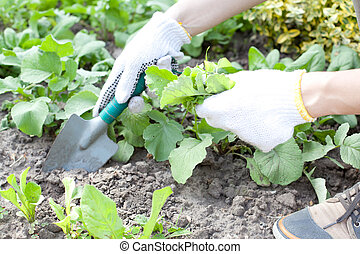 woman with shovel working in the garden bed