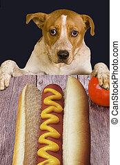 Dog wanting to eat dog. - Dog and large hot dog.