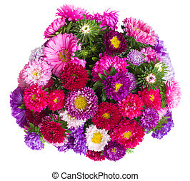 bouquet of aster flowers isolated on white background