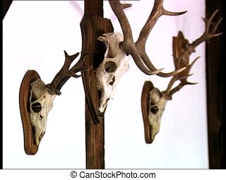 DRACULA CASTLE deer skulls zoom in