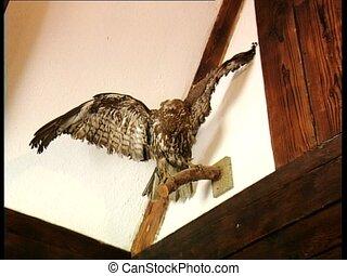 DRACULA CASTLE stuffed eagle zoom - Stuffed eagle filmed in...