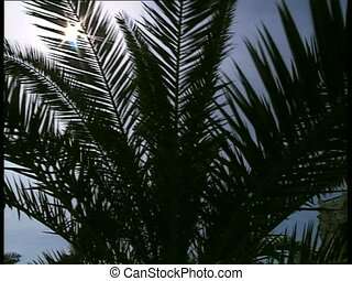 SUN and palm leaves 2 - Sun through palm leaves