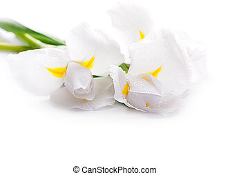 White irises against a green grass, a summer butterfly