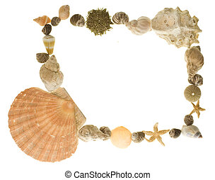 Sea life border - A border made of various shells of sea...