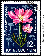 Dianthus Versicolor - USSR - CIRCA 1974: A Postage Stamp...