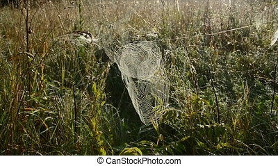 dewy spiderweb in morning grass - dewy spiderweb in early...