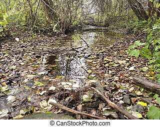 rivulet - autumn, forest stream