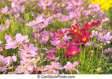 Field of colorful flowers in the garden.