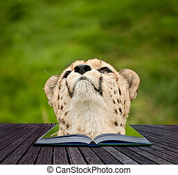 Creative concept image of cheetah in pages of book
