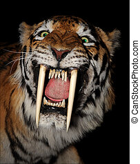 Saber-toothed tiger face - saber-toothed tiger face isolated...