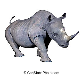 Rhinoceros charging - Grey rhinoceros charging in white...