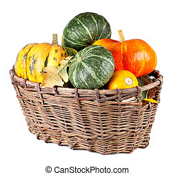 Harvested pumpkins in a large basket Isolated on white...