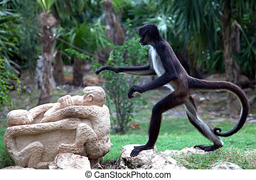 Spider monkey in Xcaret, Mexico