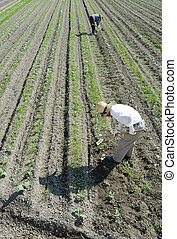 Farmers working in garden - Plant and farmers working in the...