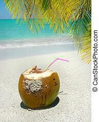 Caribbean beach coconut and palm