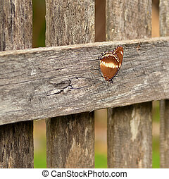 Autumn day australian butterfly rests on old wood paling...