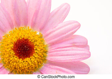 marguerite - This is a picture of a lovely marguerite.