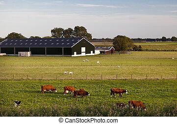 charming Dutch cattle farm
