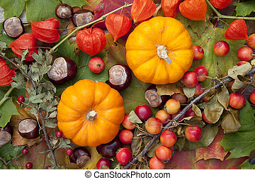 Two Pumpkins - Pumpkins on colorful autumn