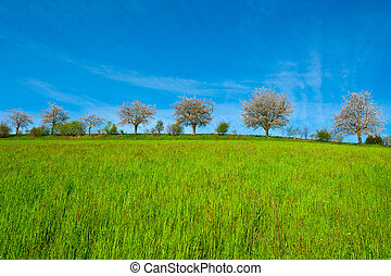 Green Meadows - Flowering Trees Surrounded by Sloping...
