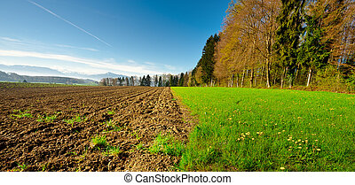 Ploughed Field near the Forest, Swiss Alps