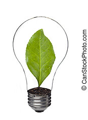 light bulb with leaf inside - Close up image of light bulb...