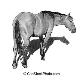 Pencil Drawing of Horse Standing - A pencil drawing of a...