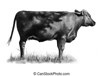 Pencil Drawing of Cow Standing - A pencil drawing of a large...