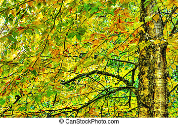 Dramatic hdr of yellow birch during fall