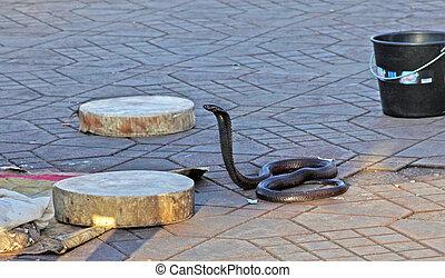 böser, Schwarz, Kobra, schlange