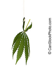 Fish hook with leaf of marijuana isolated on white...