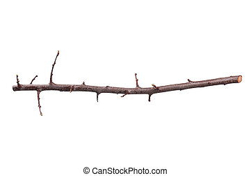 Tree branch - Single dry tree branch - isolated on white...