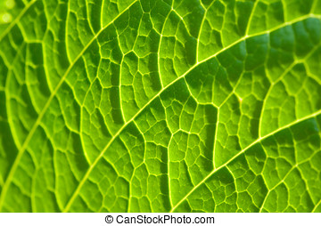 Tracery of veins on a leaf - Abstract botanical background...