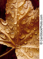 drops on dried leaf