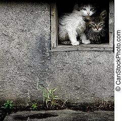 Stray Wet Kittens - Stray wet kittens in abandoned building