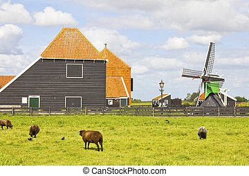 Countryside in The Netherlands