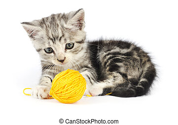 Grey kitten playing with yellow clew isolated on white...