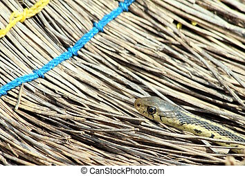 garter snake and broom