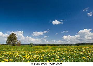 Spring landscape. - Spring landscape - dandelions fields and...
