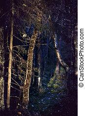 vecchio, albero, tronco, sera, luce