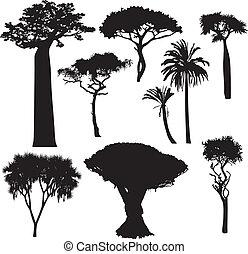 africano, árvore, silhuetas