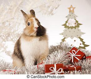 Christmas bunny - Christmas bunny