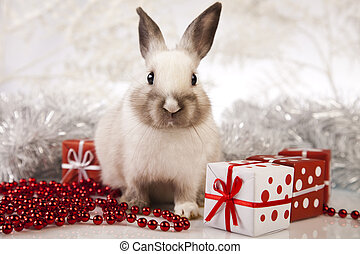 Rabbit, bunny Christmas