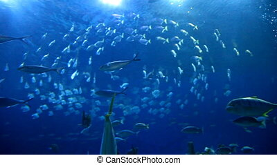 Blue ocean underwaters with fishes