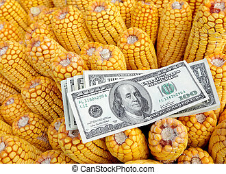 Agriculture - Agricultural concept, closeup of dollar...
